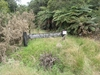 Puketi Reserve (bei Kerikeri)