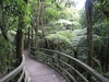 Kauri Wald