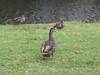 Hier gibts auch Enten