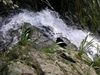 Fairy Falls Track