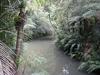 Auckland City Walk